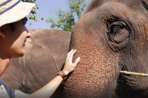 elephant carer home, chiang mai activities